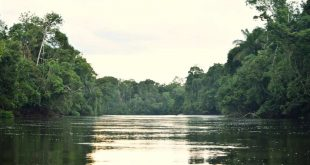 Holidays in Brazil: the luxury of nature and the beauty of the urban jungle